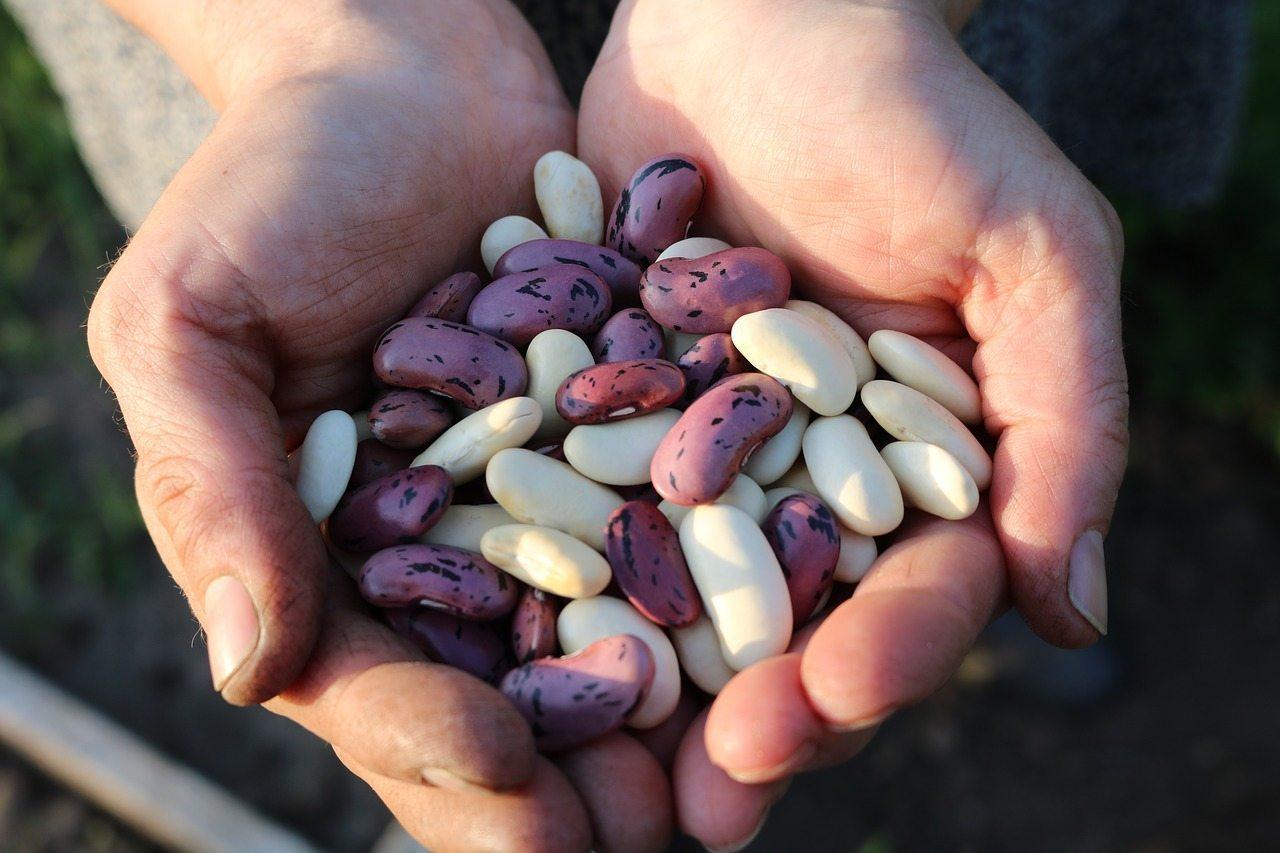 runner-beans-1835646_1280